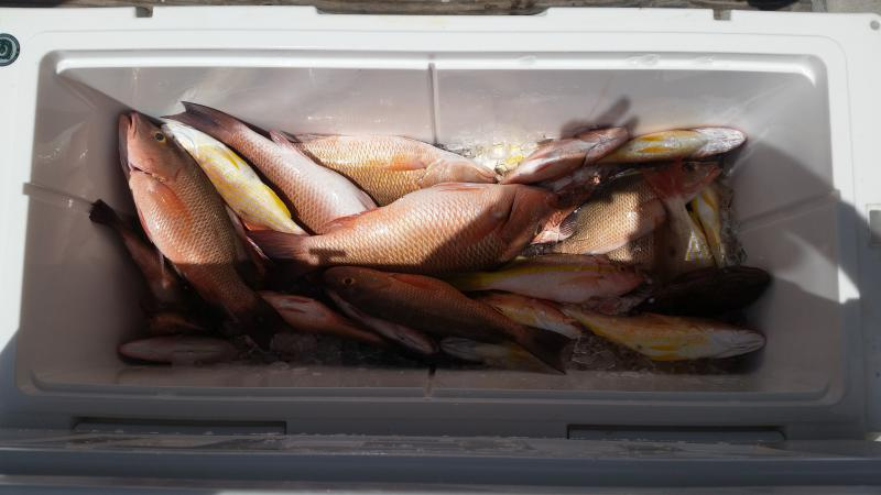 Click image for larger version.  Name:Good day on the GoM snapper and grouper.jpg Views:152 Size:42.4 KB ID:157985