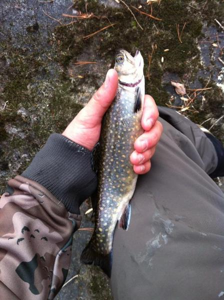 Click image for larger version.  Name:Trout Wilson2.jpg Views:71 Size:51.4 KB ID:46925